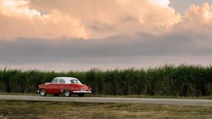 Un champ de canne à sucre à Camaguey à Cuba.