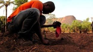 Un jeune guinéen en train de semer à Dubreka en Guinée.
