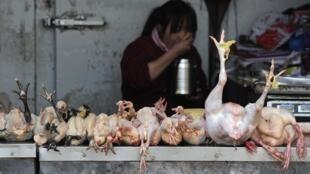 图为安徽一家销售鸡肉的小店。4月1日,上海传出两人死于一种新型的禽流感。