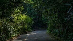 Au cœur de la forêt de Tijuca, non loin de Rio de Janeiro.