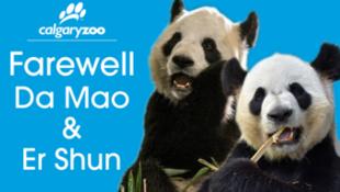 加拿大卡爾加里動物園宣傳圖