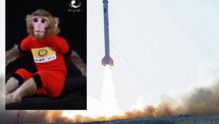 """کاوشگر """"پژوهش""""، حامل دومین میمون فضائی به نام """"فرگام""""، امروز  مأموریت زیرمداری خود را با موفقیت کامل پشت سر گذاشت."""