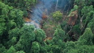 Tình trạng phá rừng bất hợp pháp tại tỉnh Koh Kong, Cam Bốt. Ảnh minh họa.