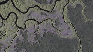 Une vue satellite de la forêt au sud-est de Libreville, prise par l'Agence aérospatiale allemande.