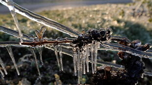 2021-04-07T134054Z_1790524376_RC21RM9C8921_RTRMADP_3_FRANCE-WINE-FROST