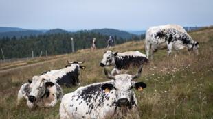 La sécheresse qui frappé la France en 2019 a obscurci l'avenir des éleveurs et de leur troupeau (image d'illustration).