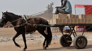 Un cheval transporte des briques pour la construction d'un édifice, à Dakar. (photo d'illustration)