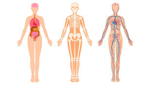 Du saut du lit à la séance de sport, tout en passant par la journée au travail, que se passe-t-il dans notre corps ?