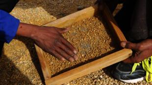 Des mineurs centrafricains à la recherche de diamants.