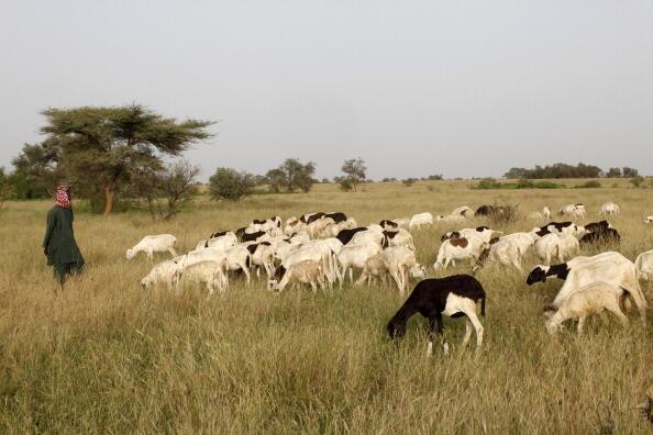 A herder in the Peul region in Senegal