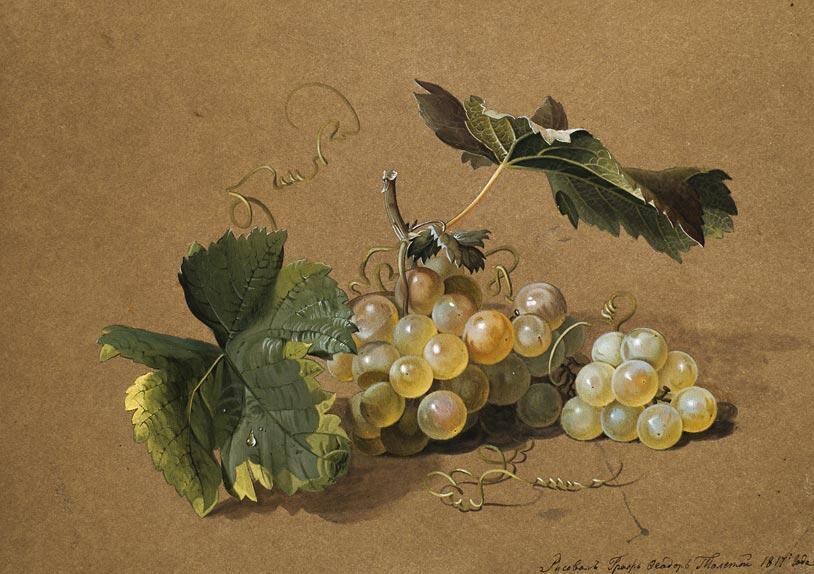 Федор Толстой. Ветка винограда. Бумага коричневая, акварель, белила. 25,4 х 34,2. 1817 г. Государственная Третьяковская галерея