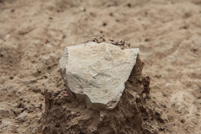 Ces outils sont faits de pierre taillée. Ils auraient pu servir à découper de la viande ou à prélever la moelle des os.