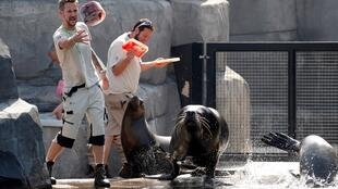 Animal carers throw ice to sea lions at the Paris Zoological Park in the Bois de Vincennes in the east of Paris,  during an unprecedented June heatwave across most of the country
