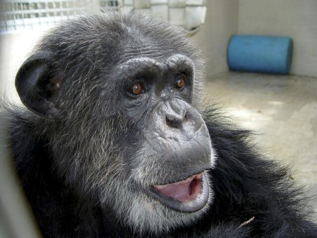 Resultado com primatas comprova teste com humanos.