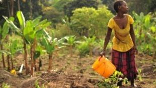 A la COP21, la France lance aujourd'hui sa proposition « 4 pour 1 000 », pour concilier climat et sécurité alimentaire.