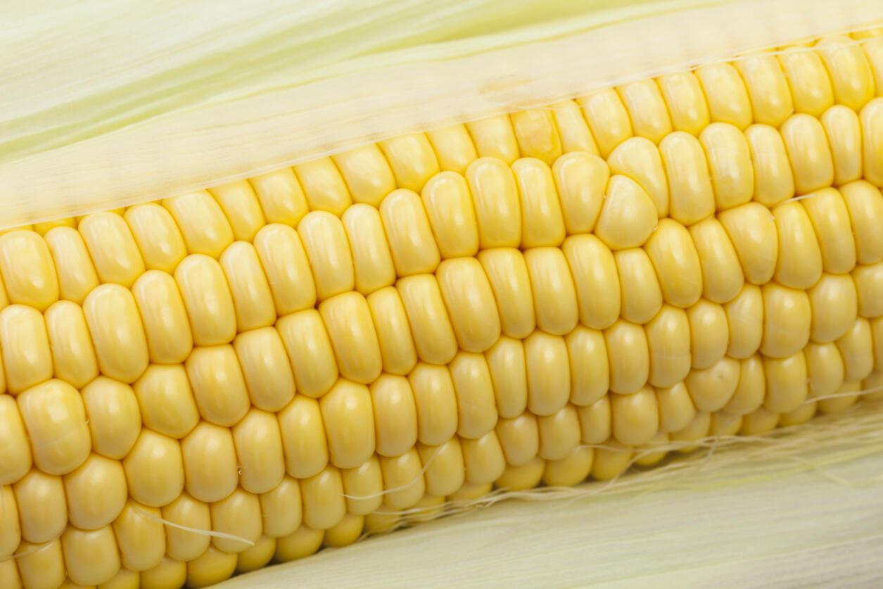 L'interruption temporaire du commerce de maïs a désagréablement surpris la filière céréalière du pays sud-américain