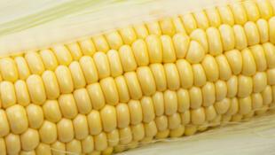 La Chine croule sous les stocks, ceux de maïs atteignent 350 000 tonnes, plus d'un an de consommation.