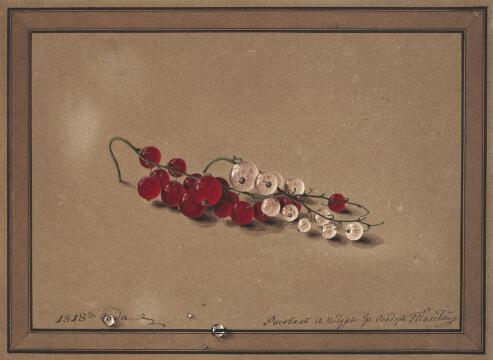 Федор Толстой. Ягоды красной и белой смородины. Бумага коричневая, акварель, белила. 17,4 X 23,8. 1818 г.