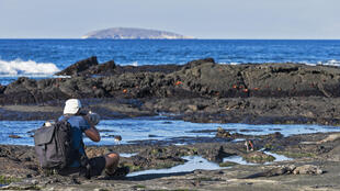 Situées au large de l'Equateur, les îles Galapagos abritent une réserve maritime protégée.