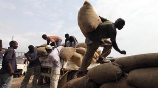 Costa de Marfil: obreros descargando bolsas de cacao para la exportación en el puerto de San Pedro (agosto 2010).