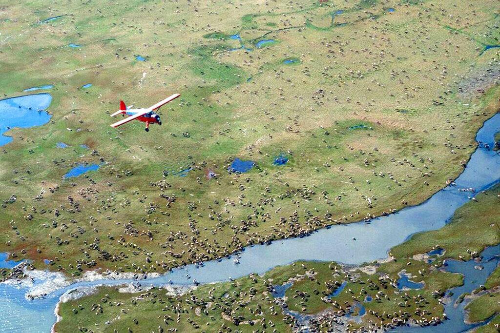 Etats-Unis - Refuge national de la faune de l'Arctique - Alaska