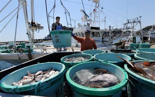 Les pêcheurs de la région d'Ibaraki, au sud de la zone de la centrale de Fukushima, ont décidé de ne plus pêcher à partir du 7 avril après que leurs captures n'aient pas trouvé preneur sur le marché de Tokyo, 6 avril 2011.