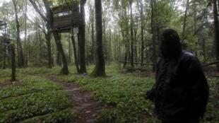 Des militants écologistes ont installé des cabanes dans les arbres, sur le site de Notre-Dame-des-Landes.