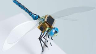 Connectée par l'intermédiaire de fibres optiques minuscules directement implantées dans le système neveux de l'insecte, la libellule n'a pas d'autres choix que d'obéir aux stimuli lumineux.
