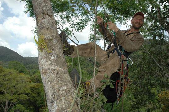 Depuis 2001, 160 chercheurs du Cnrs collectent fleurs, fruits et graines afin de suivre en permanence la phénologie des plantes de la forêt de Guyane.