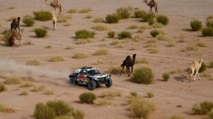 El piloto francés de Mini Stephane Peterhansel compite acompañado de dromedarios durante la etapa 10 del rally Dakar entre las localidades sauditas de Neom y Al Ula, el 13 de enero de 2021