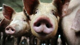 China says it found traces of Covid-19 in frozen pork and its packaging