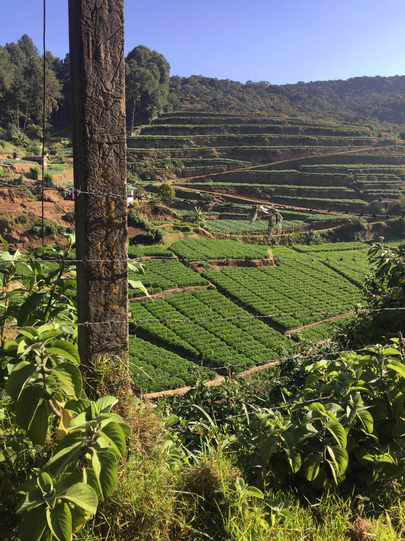 Plantação de chá no Sri Lanka (03/19).