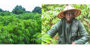 Assane Ndiaye dans les champs de manioc.