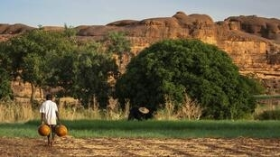 Un champ agricole au Mali.