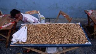 Petite fille vendant des cacahuètes, Etat de Bahia.