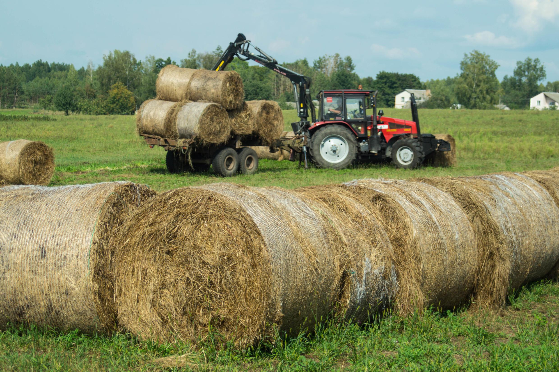 Сеном сбелорусских болот интересуют итальянские конезаводчики— оказывается, болотная трава очень нравится лошадям, нопока все упирается вдороговизну доставки