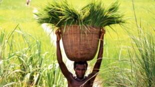 O executivo moçambicano anunciou a oferta de uma área de 60 mil quilómetros quadrados a  agricultores brasileiros