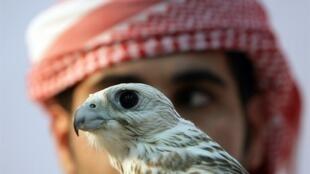 La chasse au faucon est une tradition millénaire chez les princes arabes.