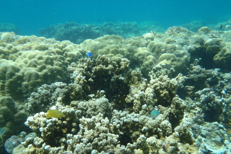 Un récif coralien à  l'archipel Palaos où les crèmes solaires toxiques pour les coraux sont maintenant interdites.