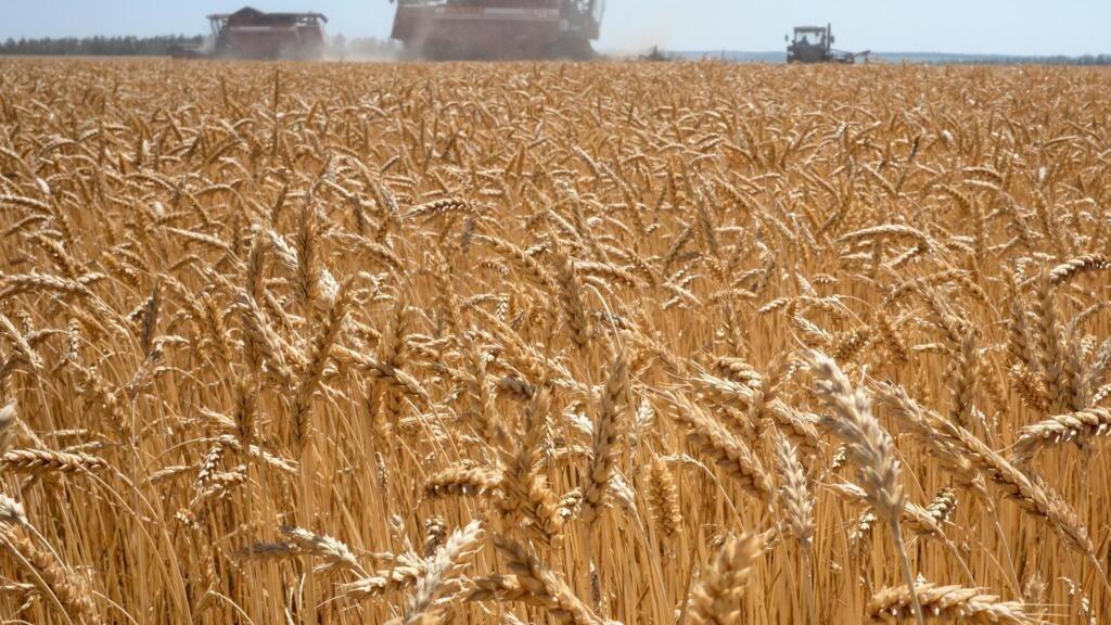 L'Algérie se prépare à importer du blé russe