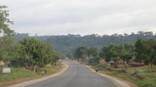 Sur l'axe Beyla-N'zérékoré, en Guinée forestière, camions de chantiers, bulldozers et tractopelles défilent.