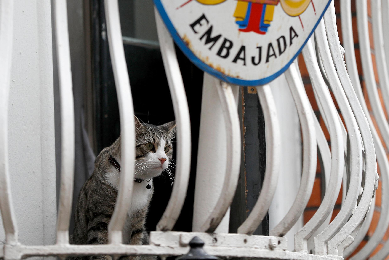 Mèo của Julian Assange trên balcon đại sứ quán Ecuador ở Luân Đôn. Ảnh chụp ngày 30/07/2018.