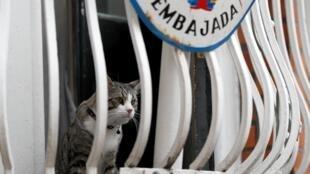 Кот Джулиана Ассанжа на балконе посольства Эквадора в Лондоне.
