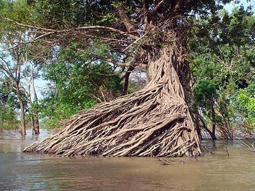 Rừng ngập nước ở Stung Treng (Cam Bốt) : Khu bảo tồn quốc tế theo hiệp ước Ramsar. Rừng này bị dự án Don Sahong đe dọa.