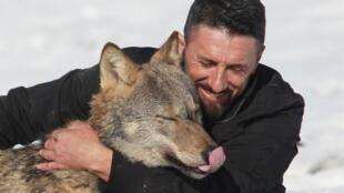 همزیستی گرگ و انسان