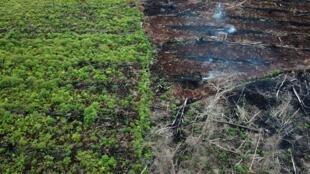Une zone protégée de la réserve faunique Rawa Singkil faisant partie de l'écosystème de Leuser à Trumon, qui est en train d'être incendiée en vue de l'ouverture d'une nouvelle plantation d'huile de palme. Photo datée du 3 mars 2018.