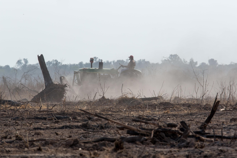 Argentina y Paraguay autorizan la tala de árboles bajo ciertas condiciones y otorgan autorizaciones hasta en zonas protegidas.