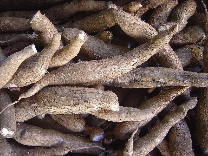 Des racines de manioc.