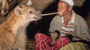 Harar en Ethiopie, la tradition se perpétue de génération en génération, les hommes nourrissent les hyènes avec de la viande, juste après le coucher du soleil.