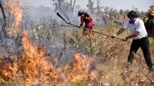 Le président bolivien Evo Morales aidant les pompiers près de Charagua, à la frontière avec le Paraguay, le 29 août 2019.
